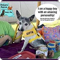 Adopt A Pet :: Sammi - Greenwood, LA