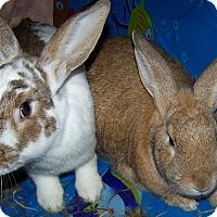 Adopt A Pet :: Francisco and Ferdinand - Alexandria, VA