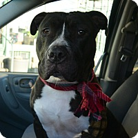 Adopt A Pet :: Dude - Afton, NY