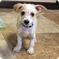 Adopt A Pet :: Marbell - Aurora, CO