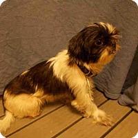 Adopt A Pet :: *DANIKA - Upper Marlboro, MD