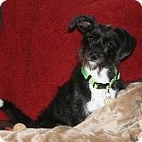 Adopt A Pet :: Beasley - Richardson, TX