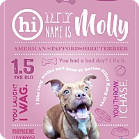 American Staffordshire Terrier Mix Dog for adoption in Jacksonville, Florida - Molly