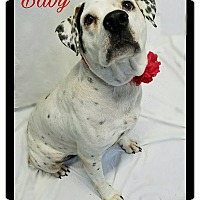 Adopt A Pet :: Baby - Grand Bay, AL
