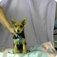 Adopt A Pet :: URGENT 1/21 @ DEVORE - San Bernardino, CA