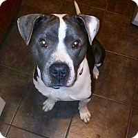 Adopt A Pet :: Leon - Durham, NC