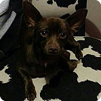 Adopt A Pet :: Brownie - Phoenix, AZ