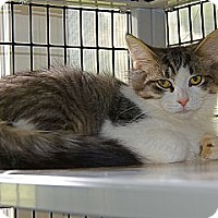 Adopt A Pet :: Andrew - Victor, NY