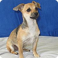 Adopt A Pet :: Micky - Tumwater, WA