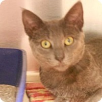 Adopt A Pet :: Dorian - Maywood, NJ