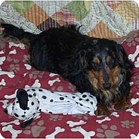 Adopt A Pet :: Hans - Antioch, IL