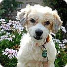 Adopt A Pet :: Charlene