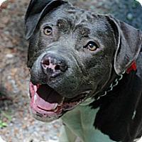 Adopt A Pet :: Macho - Tinton Falls, NJ