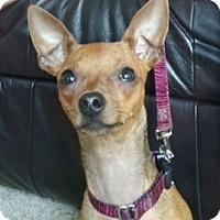 Adopt A Pet :: Tula - Sacramento, CA
