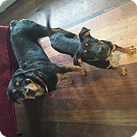 Adopt A Pet :: Frankie - Brewster, NY
