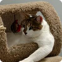Adopt A Pet :: Derek - Duluth, GA
