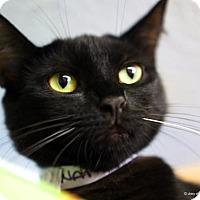 Adopt A Pet :: Natalia - Tucson, AZ