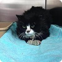 Adopt A Pet :: Boubou - Laval, QC