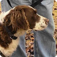 Adopt A Pet :: MS/Trekker - Hampton Cove, AL