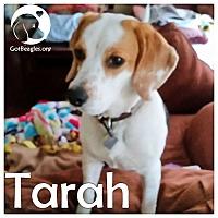 Adopt A Pet :: Tarah - Novi, MI