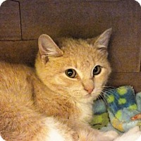 Adopt A Pet :: Butter Ball - Monroe, LA