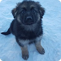 Adopt A Pet :: NISTO - Winnipeg, MB