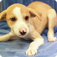 Adopt A Pet :: Zeus (ETAA) - Spring Valley, NY