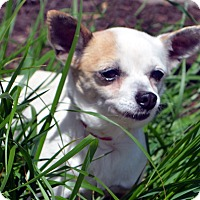 Adopt A Pet :: Axe-Adoption pending - Bridgeton, MO