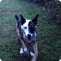 Adopt A Pet :: Piper - courtesy listing - Beavercreek, OH