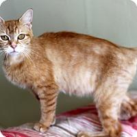 Adopt A Pet :: Sandi - Dalton, GA