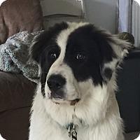 Adopt A Pet :: Finn - in MA - Lee, MA
