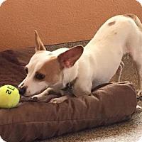 Adopt A Pet :: Indy - Kennesaw, GA