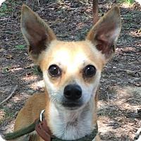 Adopt A Pet :: Linnie - Spring Valley, NY