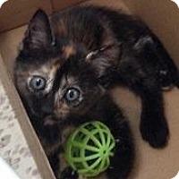 Adopt A Pet :: Sassy - Fresno, CA