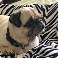 Adopt A Pet :: Eloisa - Grapevine, TX