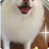 Adopt A Pet :: Lacey Snow - Irvine, CA