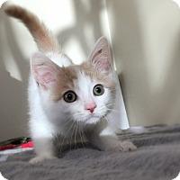 Adopt A Pet :: Slater - Gahanna, OH