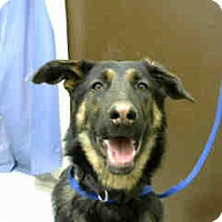 Adopt A Pet :: URGENT on 11/23 BIG BEAR - San Bernardino, CA