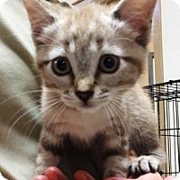 Adopt A Pet :: Holly - Bryan, TX