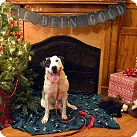 Adopt A Pet :: Louie - fort wayne, IN