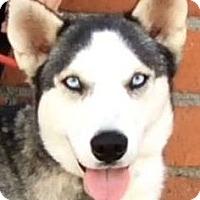 Adopt A Pet :: TRINITY (video) - Los Angeles, CA