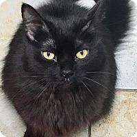 Adopt A Pet :: Davina - Chicago, IL