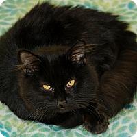 Adopt A Pet :: Puff - Salem, WV