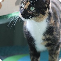 Adopt A Pet :: Calliope - Troy, IL
