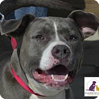 Adopt A Pet :: Hannah - Eighty Four, PA