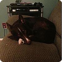 Adopt A Pet :: Kota - Wasilla, AK