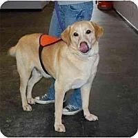 Adopt A Pet :: Britt - Cumming, GA