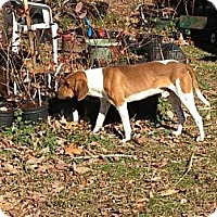 Adopt A Pet :: Copper - Hilham, TN
