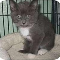 Adopt A Pet :: Electra - Shelton, WA