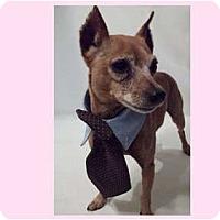 Adopt A Pet :: Rolo - Orlando, FL